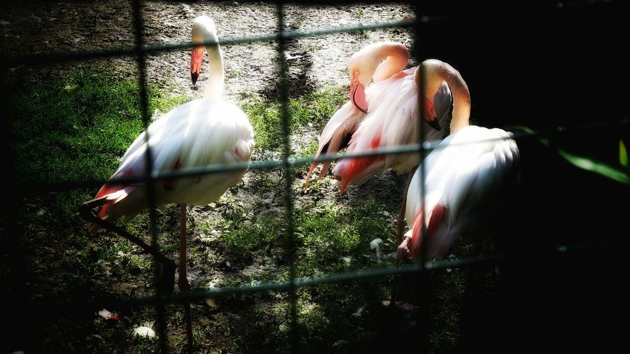 Flamingos Eye Em Nature Lover Light And Shadow Fujifilm Finepix SL1000 Achener Zoo Zoo Animals  Eye4photography  Germany