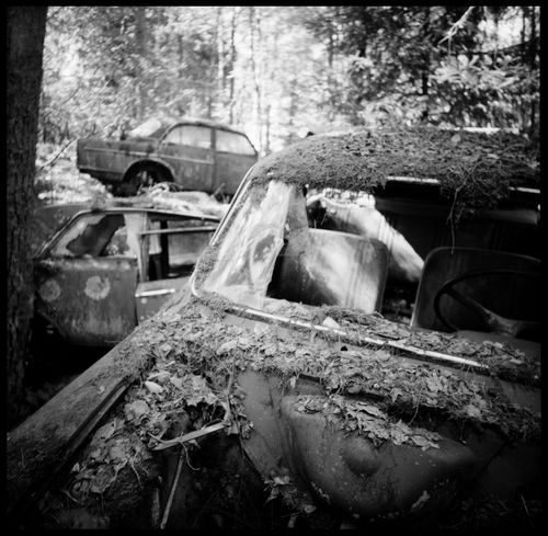The abandonded car cemetery of Båstnäs Abandonded Abandonded Cars Abandonded Cars Analogue Photography Apocalypse Art Art Of Cars Båstnäs Black And White Båstnäs Töcksfors Car Cemetery Cars Forrest Metal Metal And Wood Moss Nature No People Scandinavia Schrottplatz Summer Sweden Travel Trip Vintage Cars