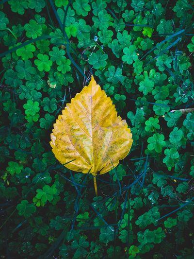 ☘️ Leaf Plant