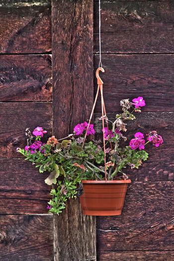 Close-up of potted plant on wooden table