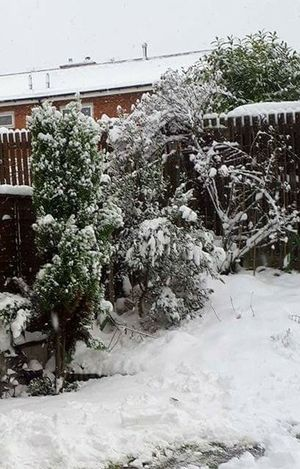 Snow Winter Cold Temperature Nature Environment Pinaceae No People Tree Water Frozen Outdoors Landscape Day Snowing Beauty In Nature