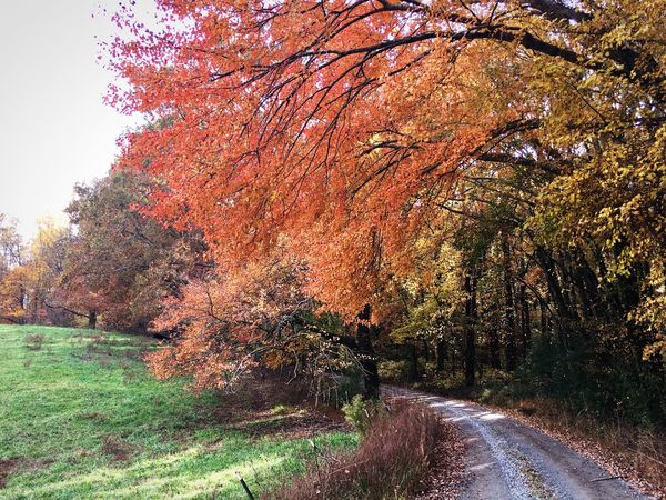 Autumn Tree Change Nature Beauty In Nature Tranquility Tranquil Scene Growth Outdoors Scenics No People Day Leaf Landscape Grass Clear Sky Country Road Countryside Season  Colors Fall Colors