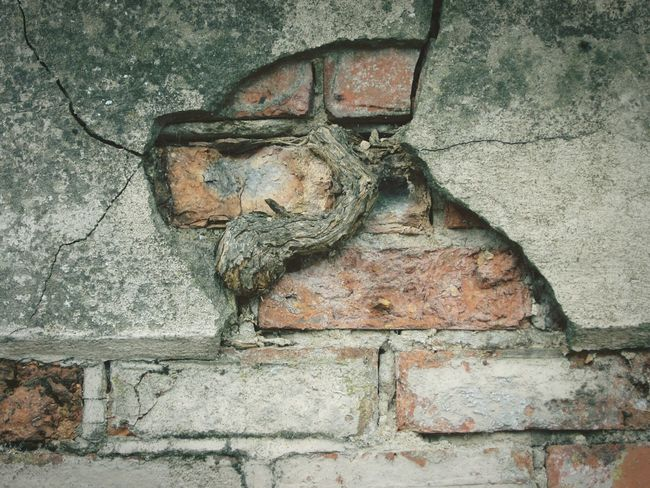 """root destroying a brick wall"" nature, in all things, should be considered.because nature will always prevail 🌿🌿🌿 Backgrounds Outdoors Cracked Wall Bricks Copy Space Root Of A Tree Wall Minimalist Architecture EyeEm Selects Brick Wall Details Of Decay Wall - Building Feature The Week On EyeEm"