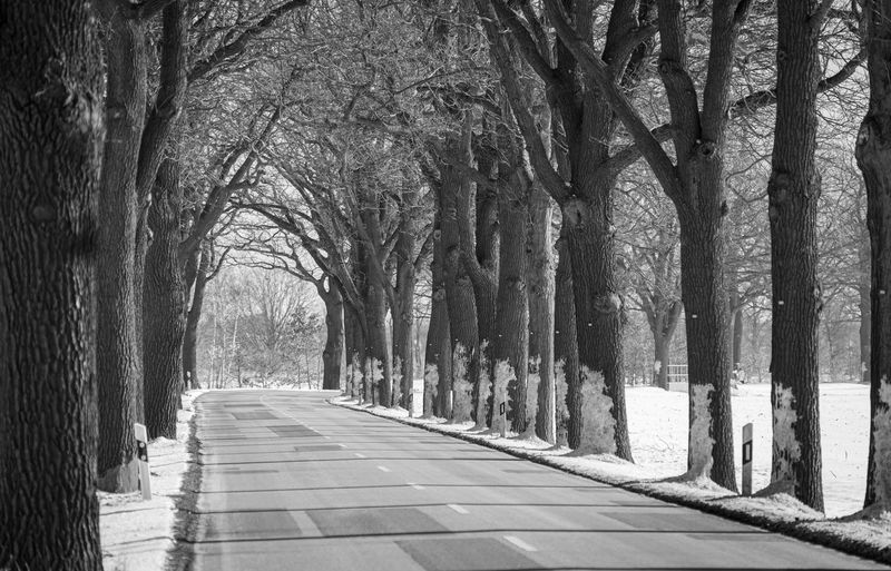 Empty road along trees in park