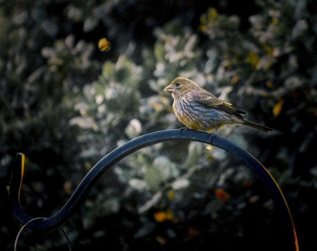 EyeEm Bird Lover  Backyardphotography Bird Bird Feeder Hanging Close-up One Bird Perching Outdoors Perching