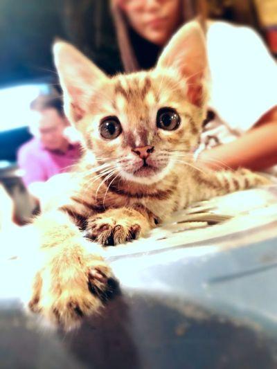 Hi! Hello_Kitty ❤just Gorgeous ..i Wanna Seem Simple..
