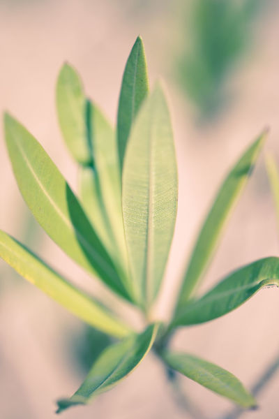 Close-up Green Color Leaf Long Leaves Macro Nature Plant Selective Focus