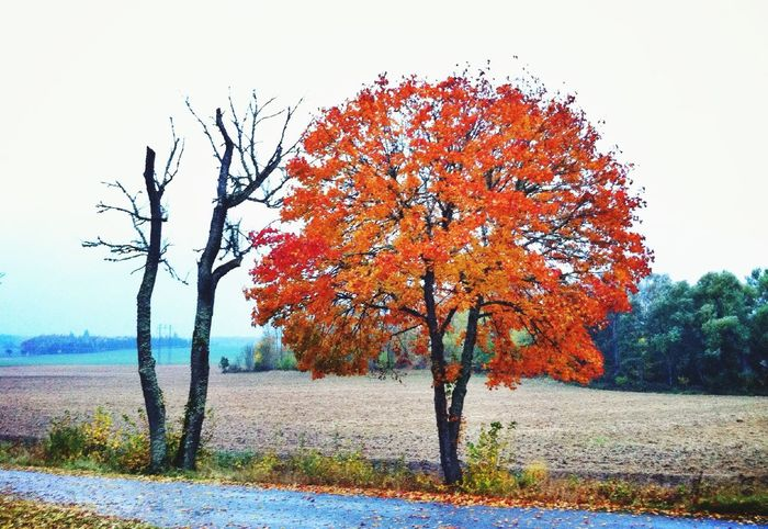 Same same, but different... Same Same But Different TreePorn Colors Of Autumn EyeEm Nature Lover