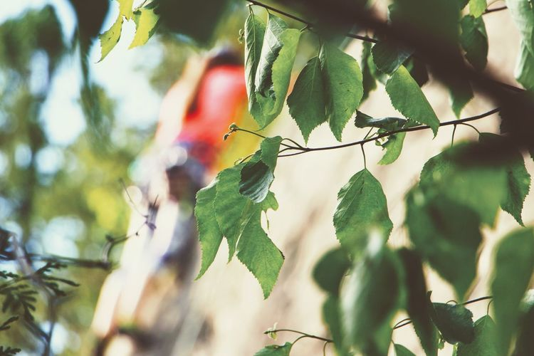 Nature Plant Tree Growth Leaf Outdoors Green Color Close-up Bouldering Rock Rock Climbing Climb Climbing Summer Summertime Leaves Focus Sunlight Sports Extreme Sports Outdoor Photography EyeEm Selects
