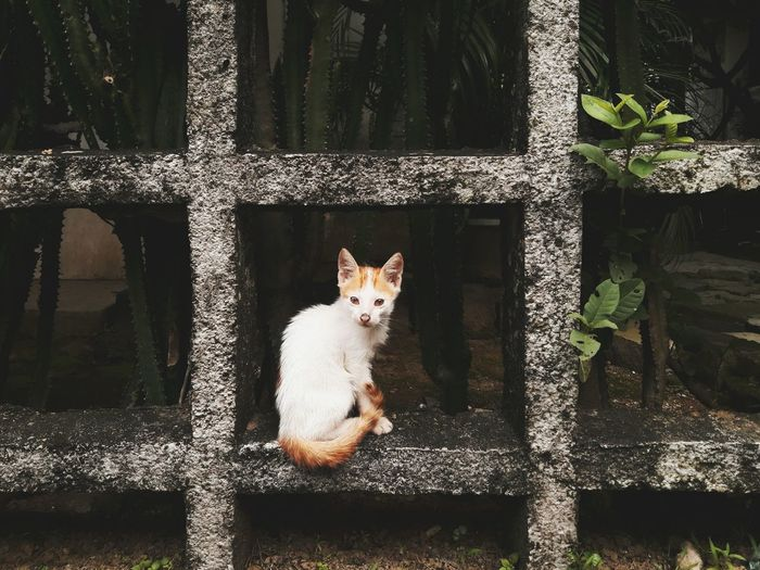 The Week On EyeEm EyeEm EyeEm Gallery Photographylovers Cellphone Photography Visualsoflife EyeemPhilippines No People Pet Portraits Domestic Cat