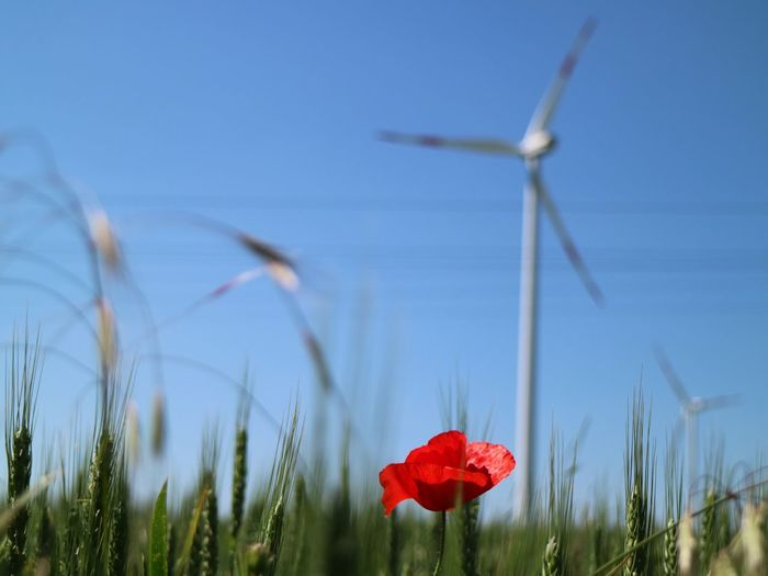 Sopron Wind Power Field Nature Flower Beauty In Nature Outdoors Wind Turbine Red