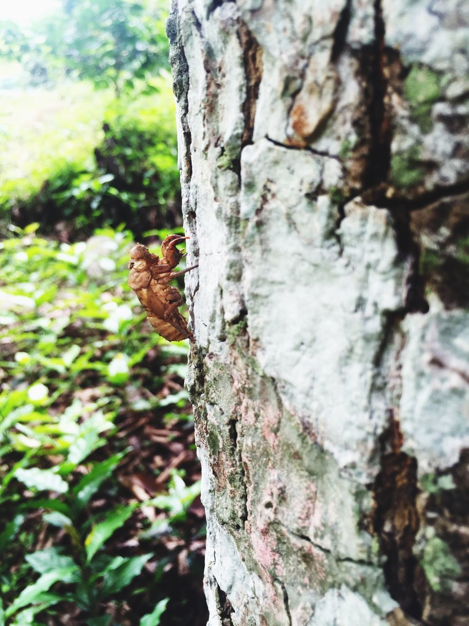 tree trunk, tree, focus on foreground, day, one animal, animal themes, no people, nature, animals in the wild, growth, close-up, outdoors, beauty in nature