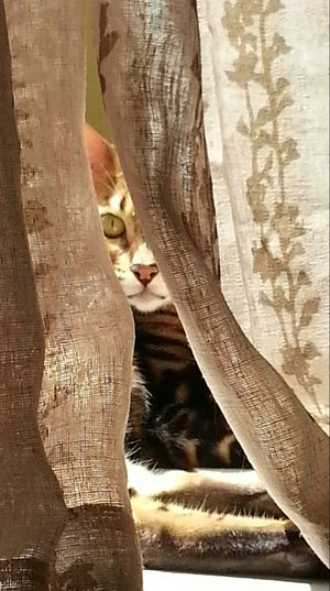 sunbathing bengal Hanging Out Texture Sun_collection