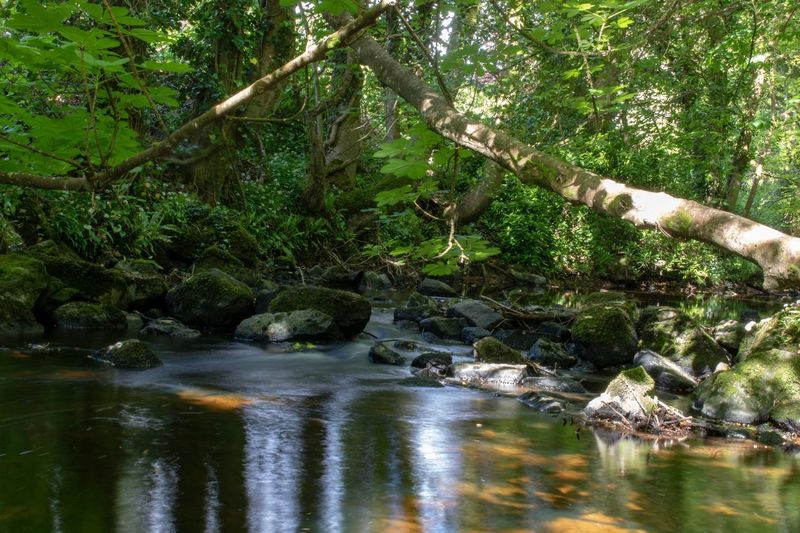 Creek near