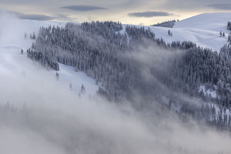 Beautiful morning in Rodnei Mountains, Romania Beauty In Nature Cloud - Sky Cold Cold Temperature Day Fog Landscape Mist Mountain Nature No People Outdoors Scenics Sky Snow Tranquil Scene Tranquility Tree Weather Winter