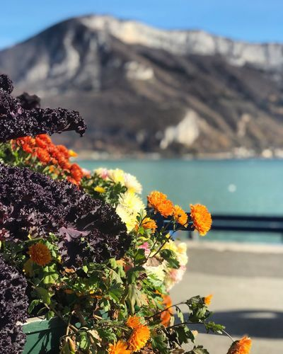 Lake Annecy, France 🇫🇷 Flower Beauty In Nature Nature Day Mountain No People Freshness Plant Outdoors Fragility Growth Sunlight Close-up Flower Head Water Sky Animal Themes Wunderlust Water Surface Beautiful Annecy Annecylake Annecy, France Annecy Lake France