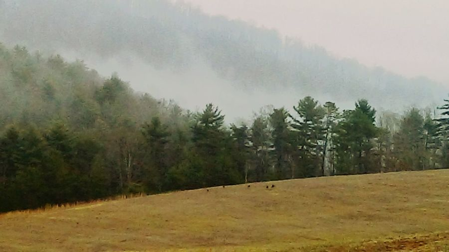 Wild turkeys on the side of a hill Nature Tree Fog Beauty In Nature Outdoors Forest First Eyeem Photo
