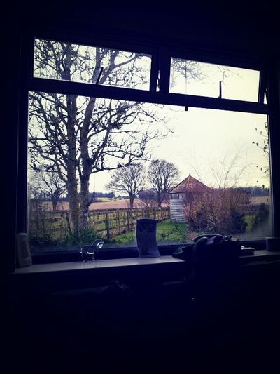 View Out Of The Window