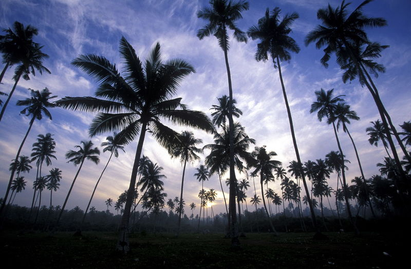 Palm Trees Growing On Field Against Sky