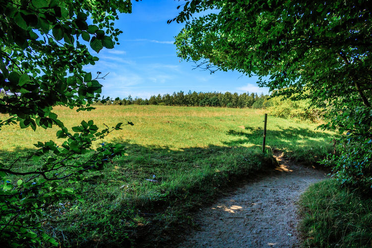 Path by the edge of the forest. Beauty In Nature Cloud Day Field Footpath Grass Grassy Green Green Color Growth Idyllic Landscape Nature No People Non-urban Scene Outdoors Plant Remote Scenics Sky Sunlight The Way Forward Tranquil Scene Tranquility Tree