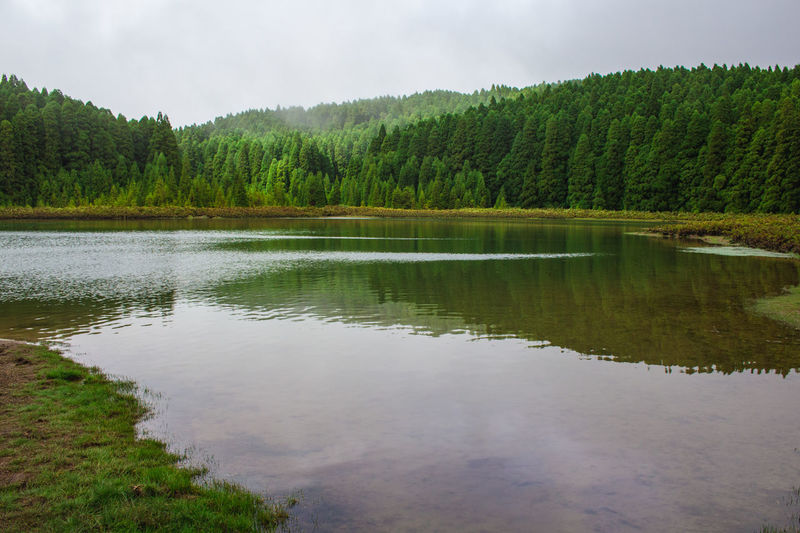 Scenic view of lake by trees in forest against sky