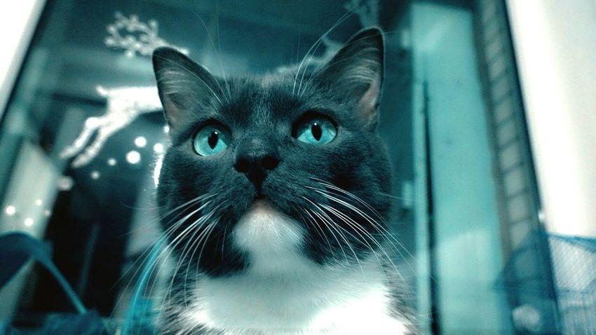 Mycat♥