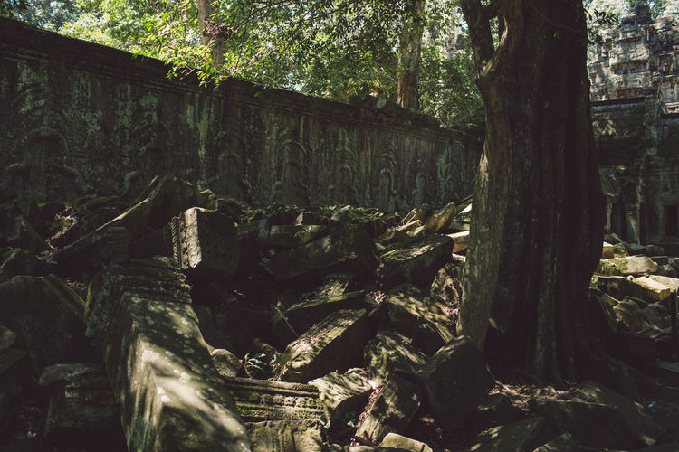 Siem Reap Cambodia Angkor Tree Forest Plant Land Tree Trunk Trunk Nature No People Day Wood - Material Tranquility Wood Outdoors WoodLand Growth Log Timber Tranquil Scene Sunlight Beauty In Nature Bark