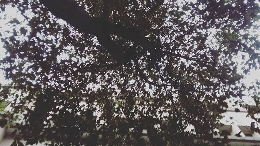 /進家門前抬頭就有一片綠蔭/ 我不是被保護長大的, 但我總有隨時可以遮風避雨的大樹 累得時候就可以停靠的港灣 我不會依賴這樣的溫暖 但我永遠不會忘記回家 覺得自己好感性 覺得打會議記錄好累