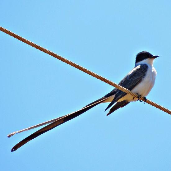 Bird Brazil Taking Photos Birds Sunday