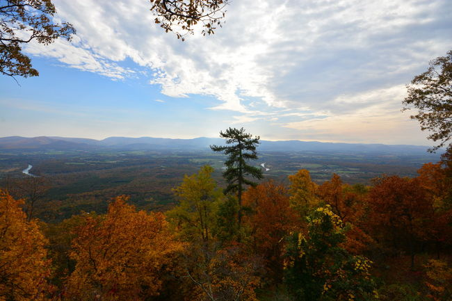 Shanandoah Virginia Autumn Beauty In Nature Cloud - Sky Day Growth Landscape Mountain Nature No People Outdoors Scenery Scenics Sky Tranquil Scene Tranquility Tree