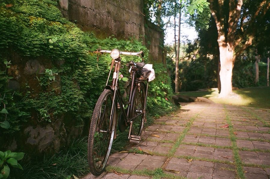 this is bali Bokeh Old School Bicycle Dutch Bicycle Sunlight Nature No People Tree Trunk Tranquil Scene Sunny Outdoors 35mm Film Analogue Photography Film Photography Filmisnotdead Brick Path Classic Bike Bikeporn Bali, Indonesia Bali