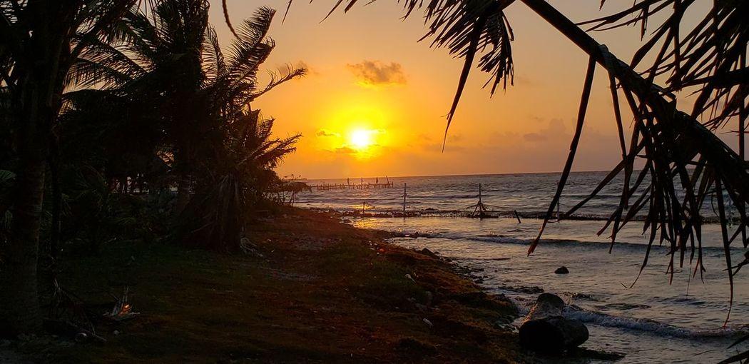 The Traveler - 2019 EyeEm Awards Tree Water Sea Sunset Horizon Beach Luminosity Wave Sunlight Silhouette The Photojournalist - 2019 EyeEm Awards