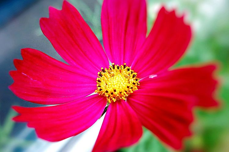 Flower Flower Head Nature Growth Close-up Nature Red Color Plant Growth
