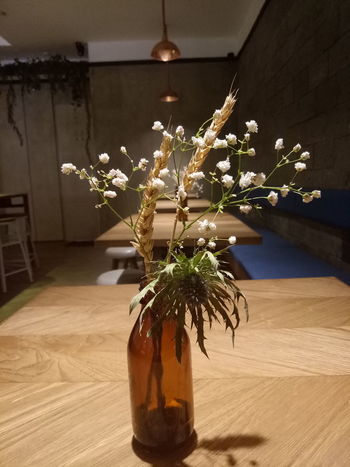 Plant No People Table Indoors  Flower Home Interior Mood Captures Concentric Freshness