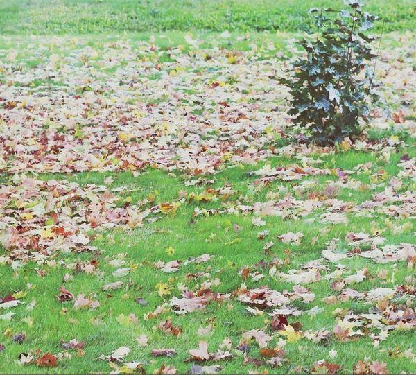 Autumn Autumn Leaves