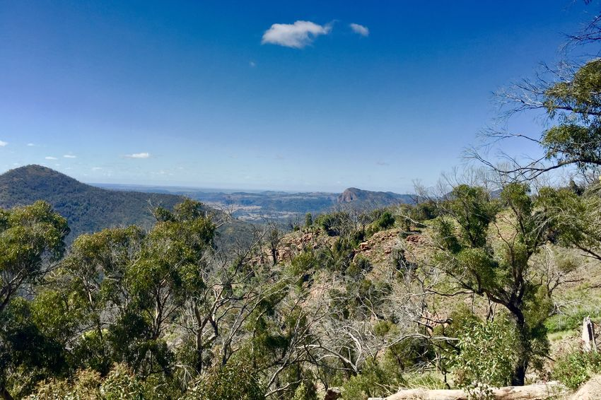 Aussie bush Nature Tree Growth Day Beauty In Nature Scenics No People Landscape Mountain Outdoors