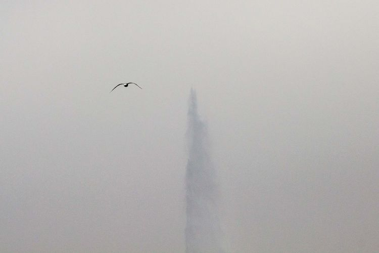 Bird Flying Flying Bird Foggy Jetdeau Winter Winterwonderland