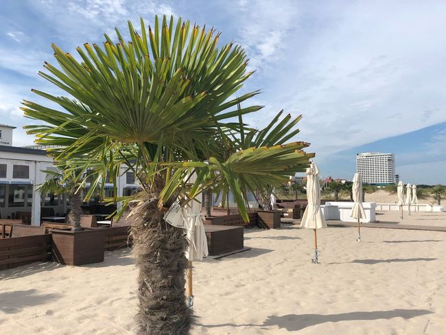 Sealife Palm IPhone X IPhone X Photography Warnemünde Baltic Sea Summer Beachphotography Summertime Sky Land Plant Tree Nature Sand Beach Sunlight Cloud - Sky Palm Tree No People Day Built Structure Architecture Growth Tropical Climate Outdoors Shadow Sunny