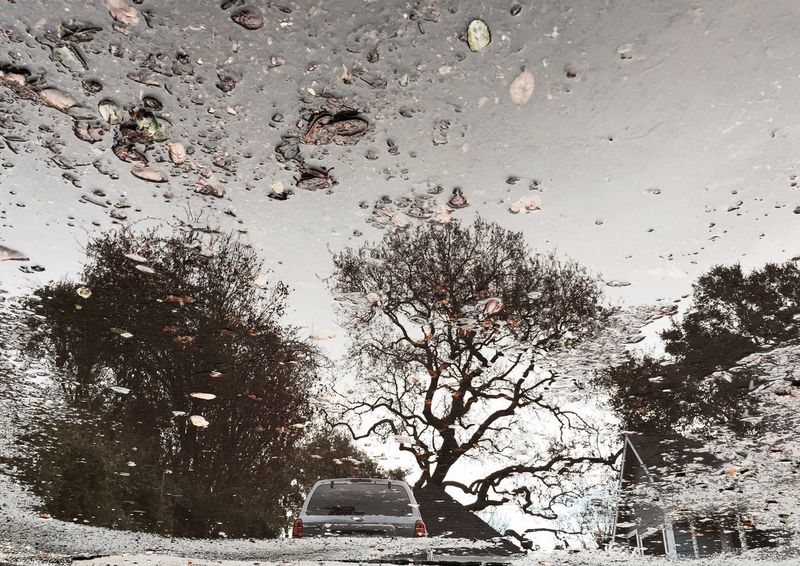 IPS2015Trees Iphonephotography Branches Bare Branches Tree Branches Trees Sonomacounty Puddle Reflections