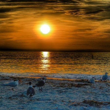 Florida Nikon Sunset Nature