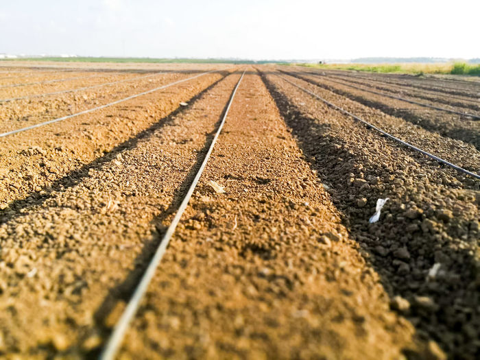 Surface level of agricultural field against sky