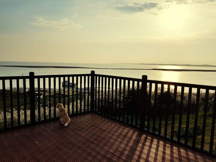 Dog Sea Water Sunset Beach Sunlight Railing Silhouette Sky Horizon Over Water
