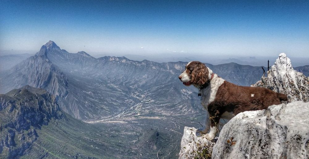 View of dog on mountain against sky