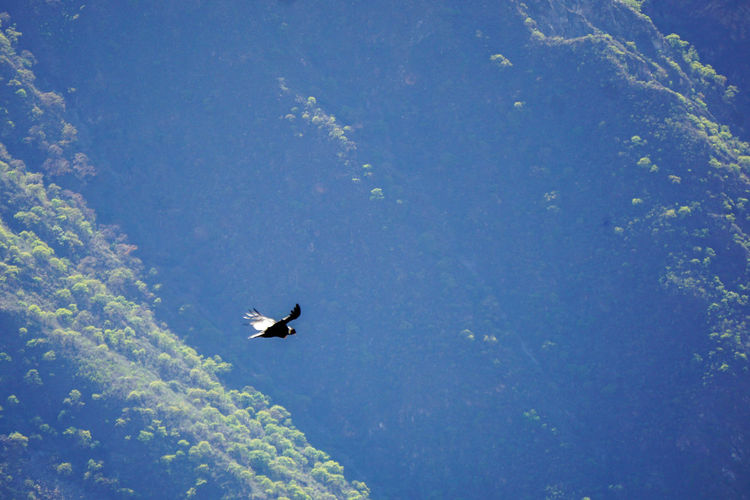 Low angle view of bird flying in blue sky