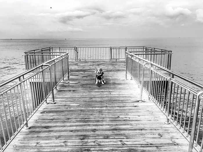 Monochrome Photography Blackandwhite Sea And Sky Dog Beagle Seaside Pier Nature Cloud - Sky Sea