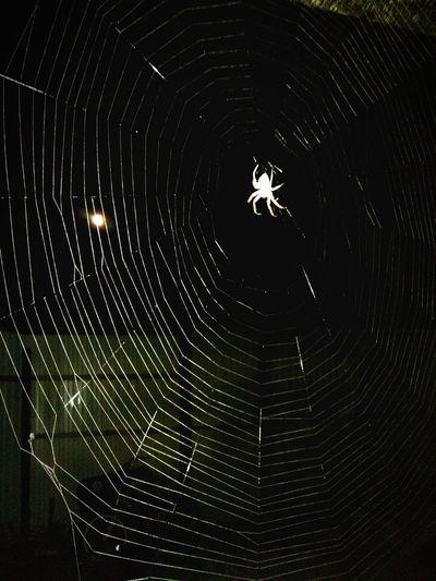 паук паутина Spider Wilefoxclub Wileyfox Ночь