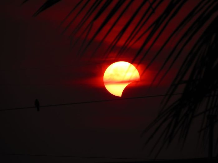 Partial Solar Eclipse through palm tree Silhouette Red Astronomy No People Nature Solar Eclipse Solareclipse2016 Sun Sunrise_sunsets_aroundworld Palm Tree Palm Leaf EyeEm Selects The Week On EyeEm EyeEmNewHere