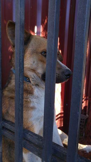 Animals Posing Dog Sad Dog Sad Dog Eyes Stray Dog Thinking Deeply, Thinking Dog Thoughtful Thoughtfull LG G4📱 Lgg4photography