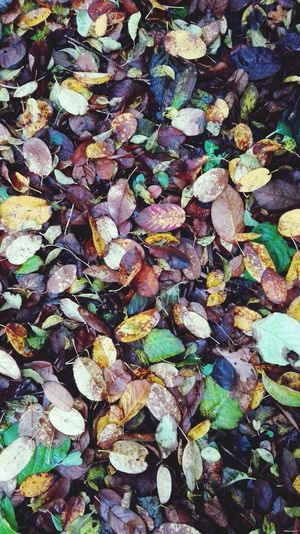 Autumn Leaves Fall Colors Nature Ground Colors Autumn Rainy Beauty Of Nature Colorful From Above