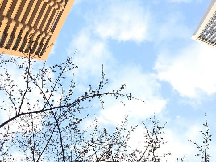 ソメイヨシノ🌸一輪だけ咲いてる✨見えますか❓😊 Check This Out cherry blossom Can't You See That? Enjoying The View Enjoying Life